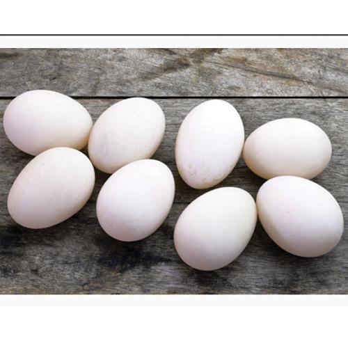 Egg & Dairy